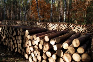 TFT Woodexperts highlights growth in timber training