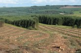 Tilhill Forestry integrates into BSW Group