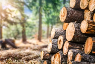 Market Monitor: Global timber supply