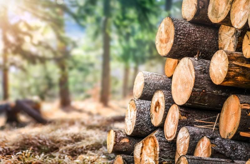Market Monitor: Global timber supply