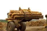 SR Timber assures merchants over roofing batten supplies