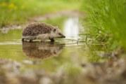 ACO announces biodiversity webinar series